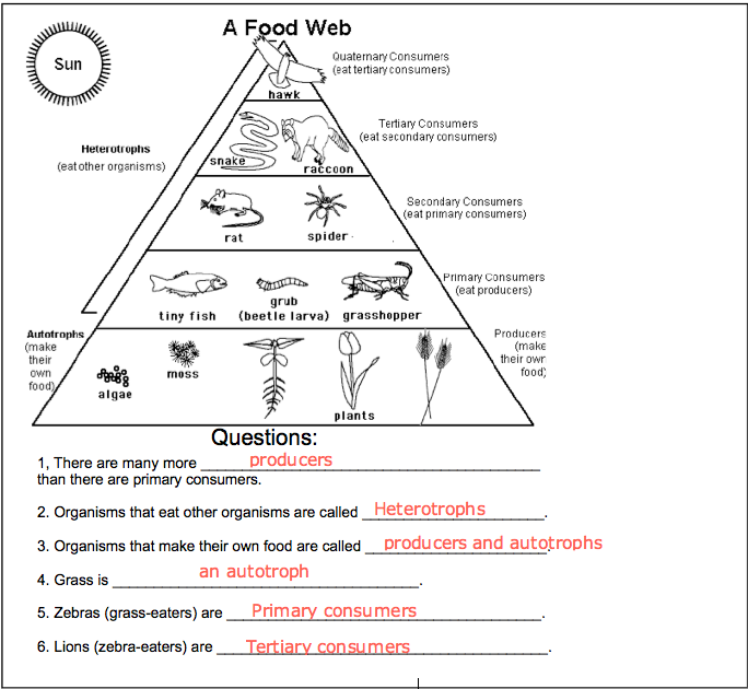 Winonak3s blog blog archive food chain worksheet food chain worksheet ibookread PDF